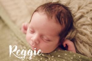 Reggie 17lr